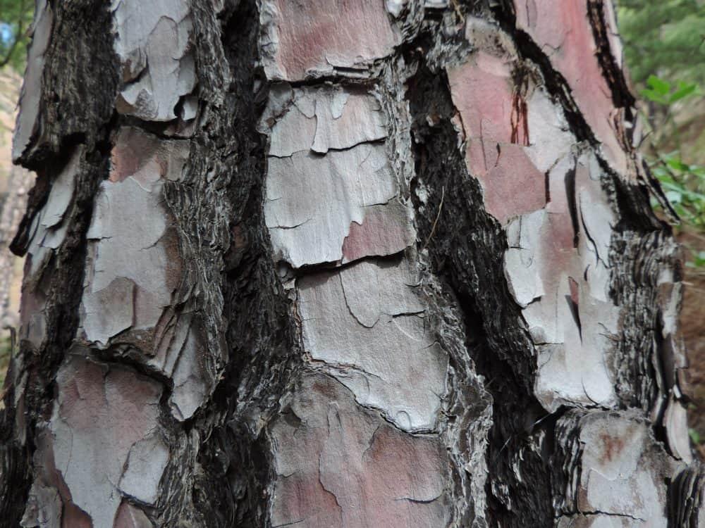 SEO-Webtexte für Holz Schnettler Soest